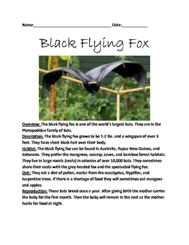 Black Flying Fox - Review Article Lesson Facts Information Questions Vocab