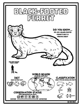 Black-Footed Ferret -- 10 Resources -- Coloring Pages, Reading & Activities
