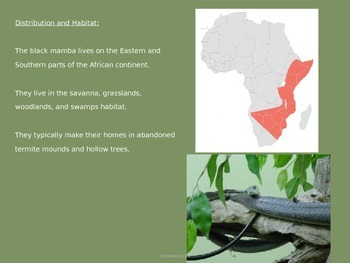Black Mamba - Snake - Power Point - Information Facts Pictures