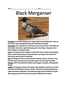 Black Merganser - critically endangere bird lesson review