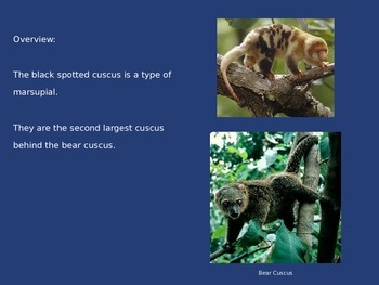 Black Spotted Cus Cus - Power Point - Pictures Facts Information Review