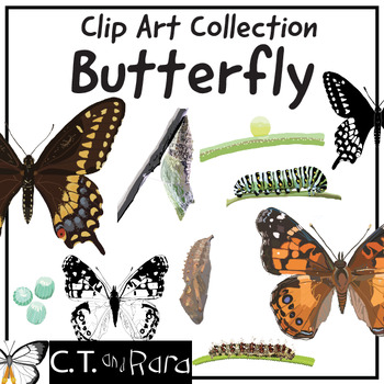 Black Swallowtail Butterfly and Painted Lady Butterfly Clip Art