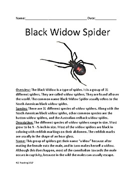 Black Widow Spider - Widow Spiders lesson review article information questions