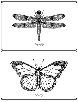 Black and White Insect Art