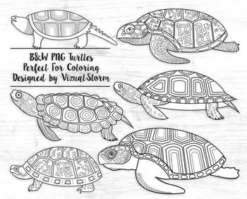 Black And White Turtle Clipart Black Line Turtles Coloring Book Illustrations