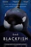 Blackfish Documentary Viewing Guide Netflix