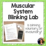 Muscular System- Blinking Lab