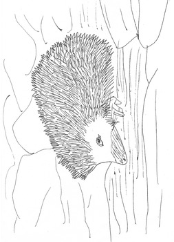 Blonde Hedgehog Colouring In Sheet