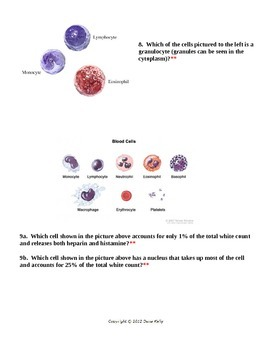 Blood Cell ID with KEY