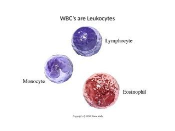 Blood Cells PPT