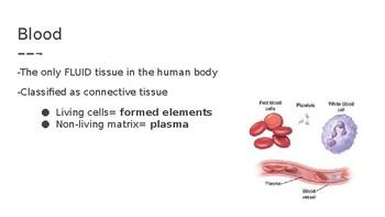 Blood Components Presentation
