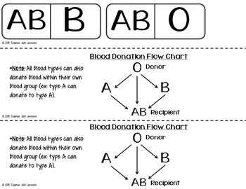 Blood Donor Dominoes {A Blood Type Matching Game}