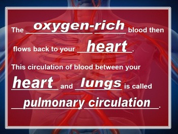 Blood Flow PowerPoint with Cloze Notes