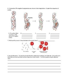 Blood Type Assessment