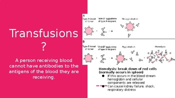Blood Types Presentation