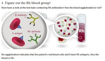 Blood Typing Game Worksheet with PowerPoint Presentation