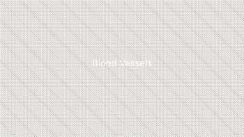 Blood Vessels Powerpoint
