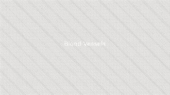 Blood Vessels Powerpoint