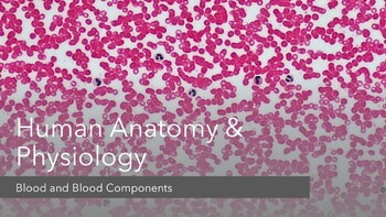 Blood and Circulatory System Complete Lesson (PowerPoints and Assessments)