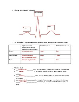 Blood and Electrical Flow Through the Heart with Answer Key