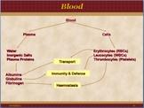 Blood and Haemopoiesis