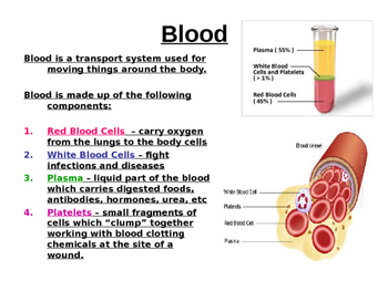Blood and blood vessels power point