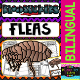 Bloodsuckers - Fleas - Reading Comprehension and worksheets - Bilingual