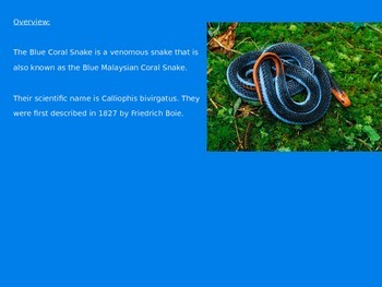 Blue Coral Snake - Power Point - Facts Information Pictures