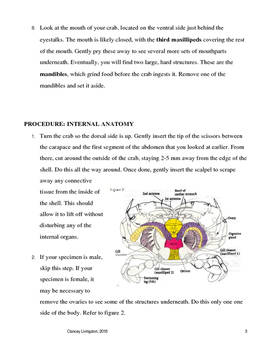 Blue Crab Dissection Guide