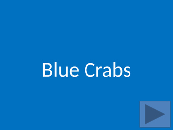 Blue Crabs Interactive PowerPoint