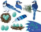 Blue Jay Bird Clip Art Set
