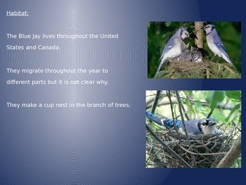 Blue Jay Bird Power Point - 8 Slides Facts Information Pictures