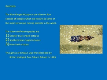 Blue Ringed Octopus - Power point Facts Pictures