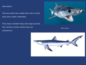Blue Shark - Power Point - all the facts information pictures