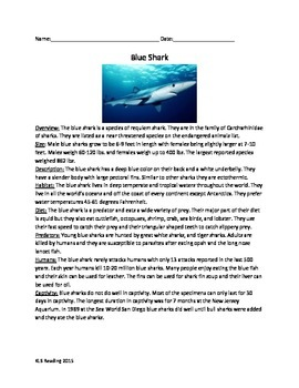 Blue Shark - Review Article - Facts Info Questions Vocabulary Word Search
