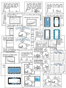 Blue Whale - Animal Booklet - Mini coloring book