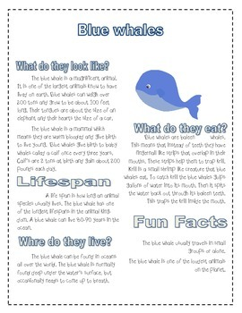 Blue Whale research activity ( Dear, Mr. Blueberry)
