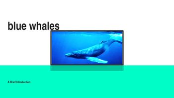 Blue Whales Introduction PowerPoint