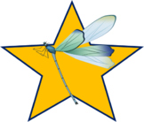 Blue and Green Dragonfly Star (png)