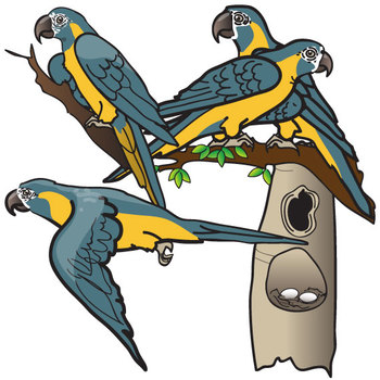 Blue-throated Macaw Life Cycle Clip Art Set