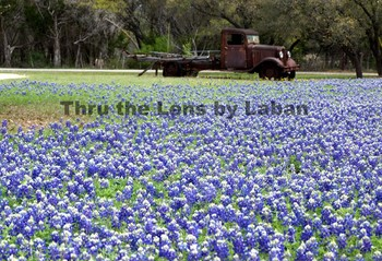 Truck and Bluebonnets Stock Photo #72