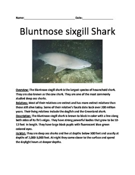 Bluntnose Sixgill Shark - review article info deep sea shark - questions vocab