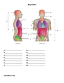 Body Cavities Quiz or Worksheet