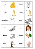 Body Flashcards or Body Dominos