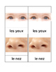 Body Matching Cards French Montessori