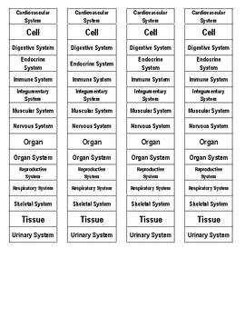Body (Organ) Systems Cut-n-Paste Vocabulary