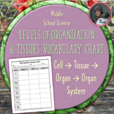 Body Organization Vocabulary Chart: Cells, Tissues, Organs, and Systems