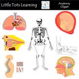 Anatomy Clip Art