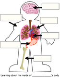 Body Part Worksheet