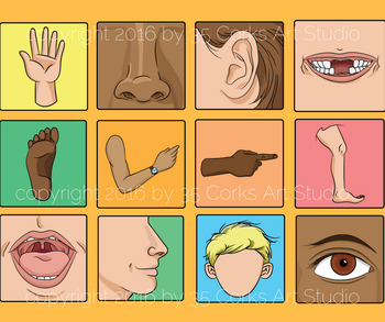 Body Parts Clip Art - 62 Images for Elementary School Students